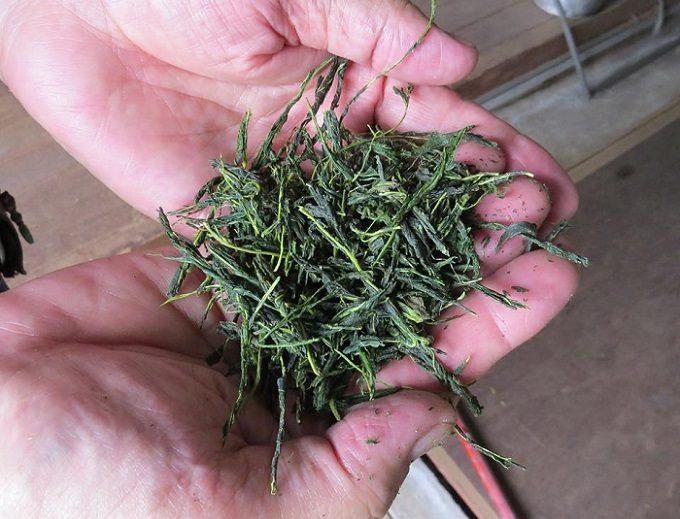 香川の「西森園」が作る「さぬきマルベリーティー」に使われる茶葉