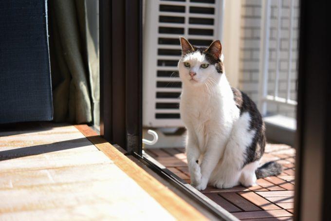 グラフィックデザイナー・島 喜実子さんの愛猫4