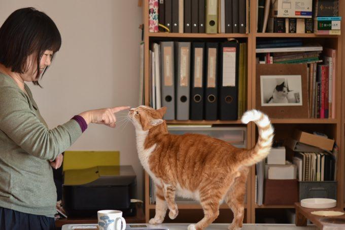 グラフィックデザイナー・島 喜実子さんの愛猫5
