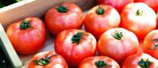 千葉県栄町にあるトマト農家の直売所「NOLAND(ノランド)」の完熟トマト