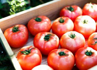 一度食べたら他のトマトには戻れない。直売所「NOLAND」で味わう絶品完熟トマト