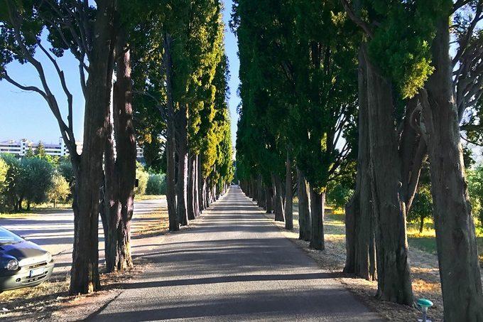 糸杉の並木