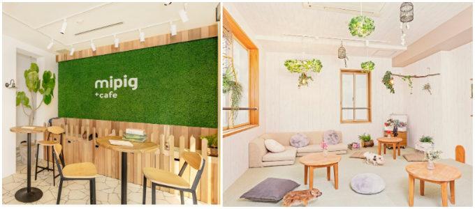 マイクロブタと触れ合える目黒「mipig cafe(マイピッグカフェ)」の店内イメージ画像