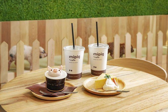 マイクロブタと触れ合える目黒「mipig cafe(マイピッグカフェ)」のおすすめメニュー