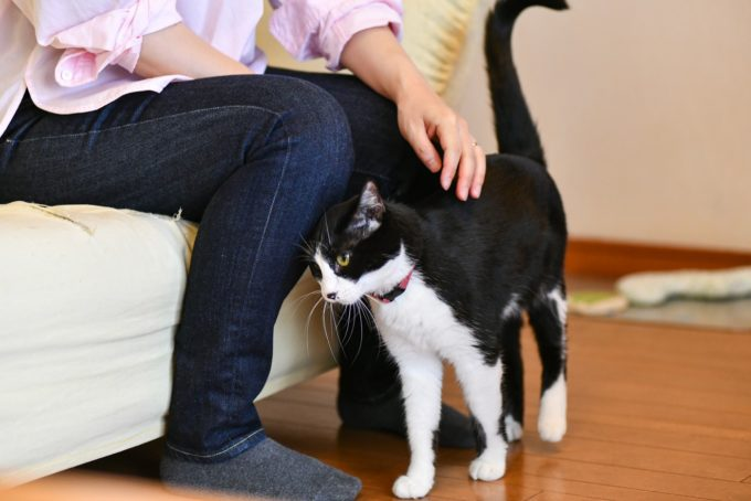 小説家・深緑野分さんと愛猫1