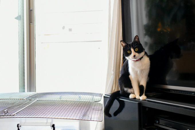 小説家・深緑野分さんの愛猫3