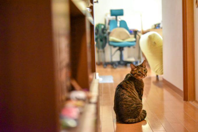 小説家・深緑野分さんの愛猫4
