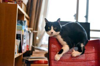猫が教えてくれること「かもしれない行動」/小説家・深緑野分さんの場合vol.2