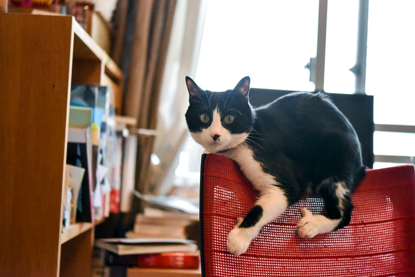 小説・深緑野分さんの愛猫1