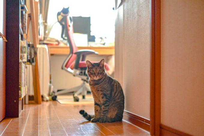 小説・深緑野分さんの愛猫2