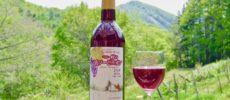 札幌ブランド「ばんけい峠のワイナリー」のビオワイン