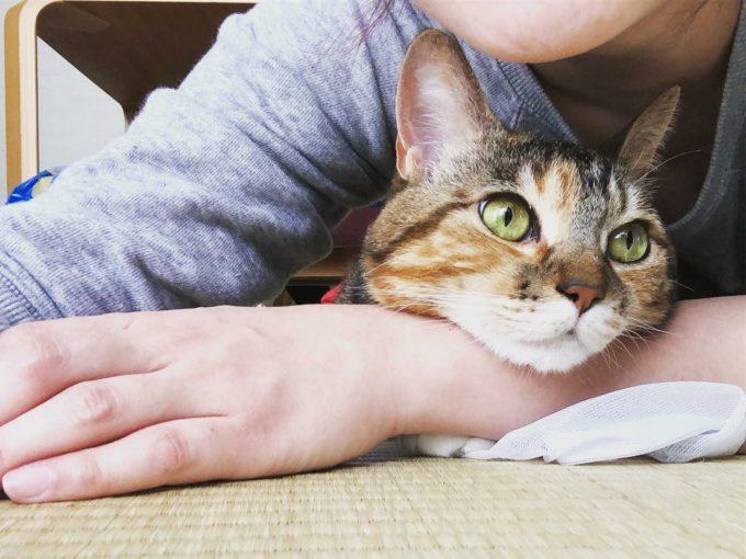 地域計画学研究者・江口亜維子さんの愛猫「うり」