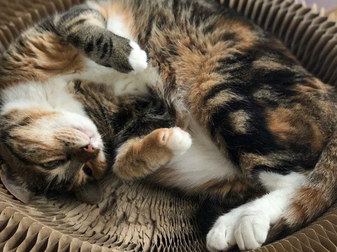 地域計画学研究者・江口亜維子さんの愛猫「うり」3