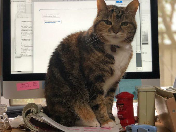 地域計画学研究者・江口亜維さんの愛猫「うり」が資料の上に乗っている姿