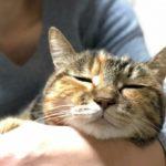 猫が教えてくれること「居場所」/地域計画学研究者・江...