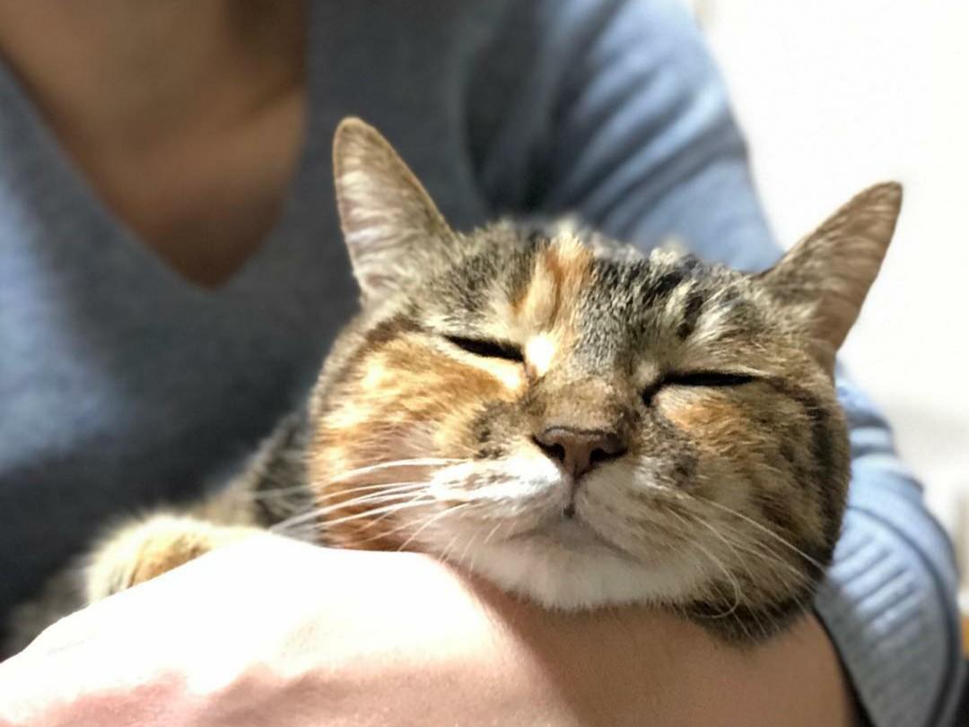 地域計画学研究者・江口亜維子さんの愛猫・うり1