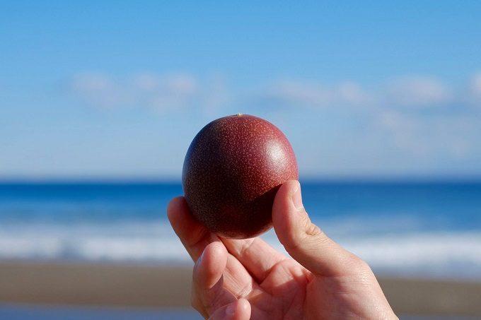 海を背景にした「RYO'S FARM」のパッションフルーツ