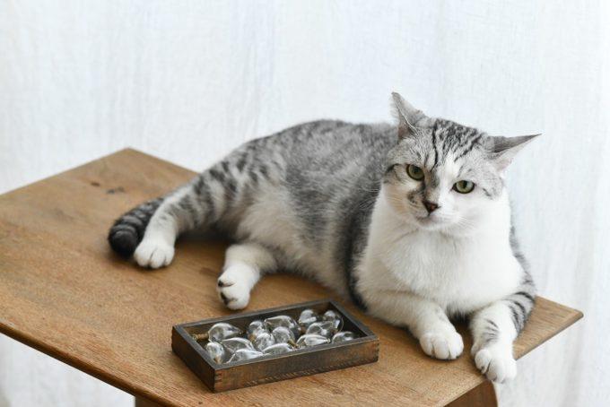 ガラス作家・松本裕子さんの愛猫「雨」が横たわる姿1