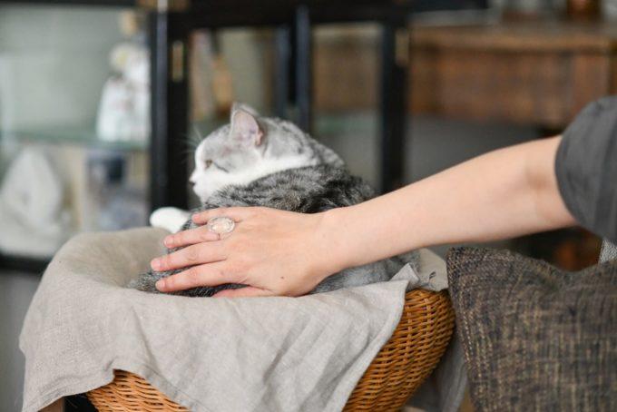ガラス作家・松本裕子さんに撫でられる猫「雨」