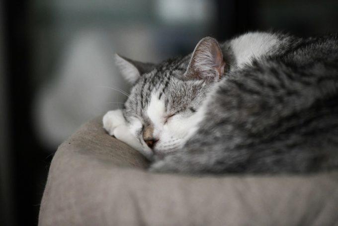 ガラス作家・松本裕子さんの愛猫「雨」の寝顔