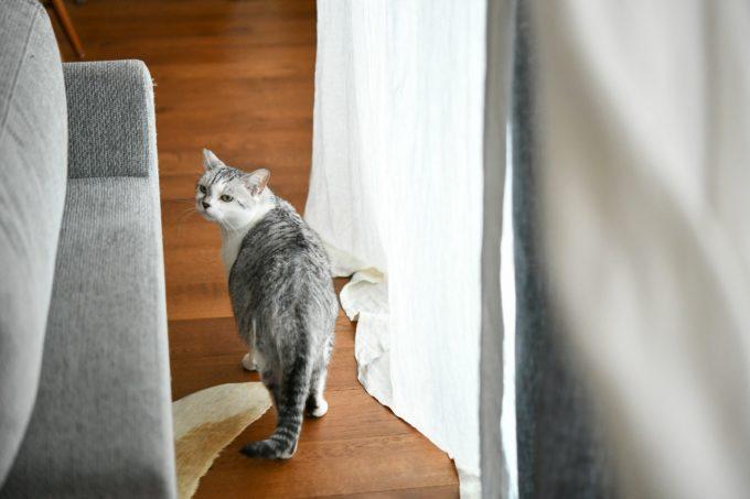 ガラス作家・松本裕子さんの愛猫2