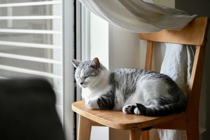 ガラス作家・松本裕子さんの愛猫3