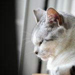 猫が教えてくれること「命の終い方」/ガラス作家・松本...