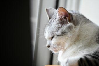 猫が教えてくれること「命の終い方」/ガラス作家・松本裕子さんの場合vol.2