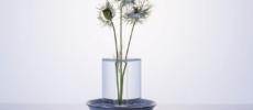 水の柱に植物が浮いているように見える花器「shallows」