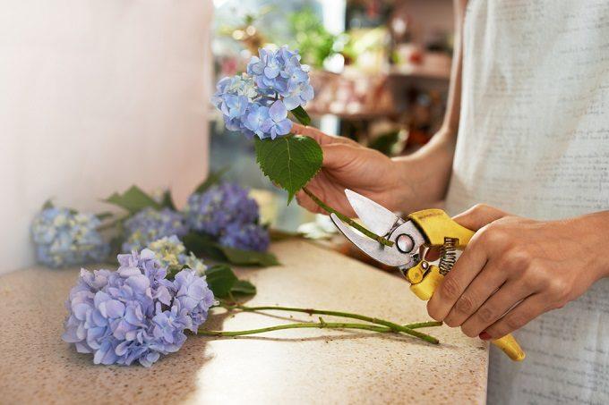 あじさいの切り花を長持ちさせる方法で、花の茎を切る