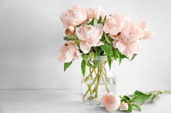 ちょっとしたコツで見違える。切り花を長持ちさせるお手入れ方法