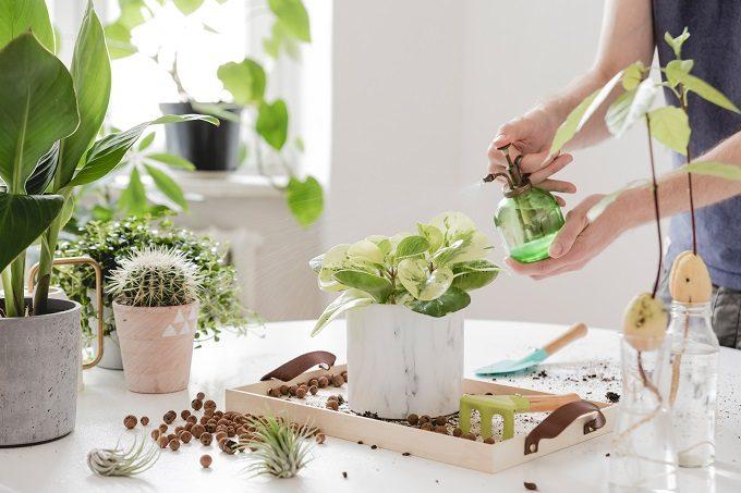 初心者でも簡単、多肉植物の基本の育て方12