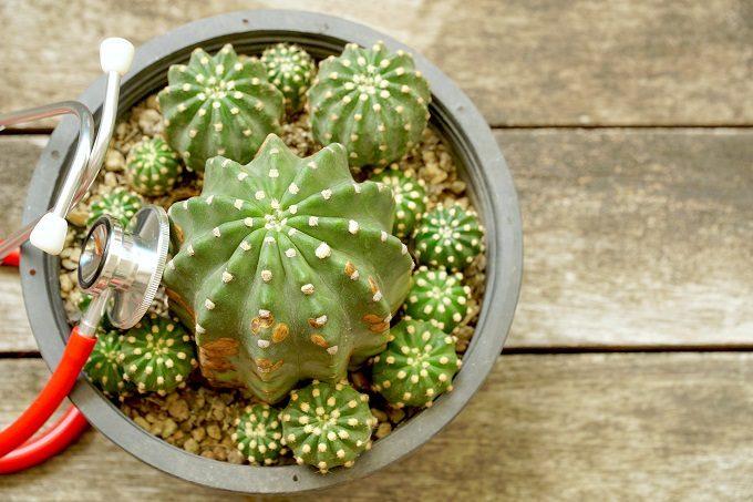 初心者でも簡単、多肉植物の基本の育て方13