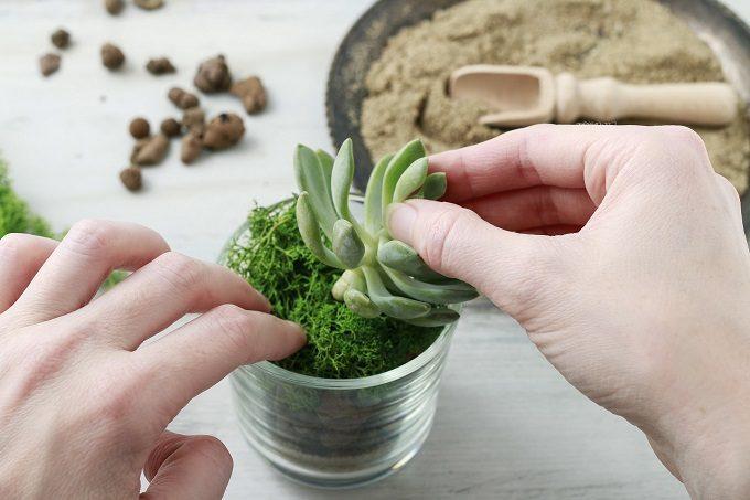 初心者でも簡単、多肉植物の基本の育て方14