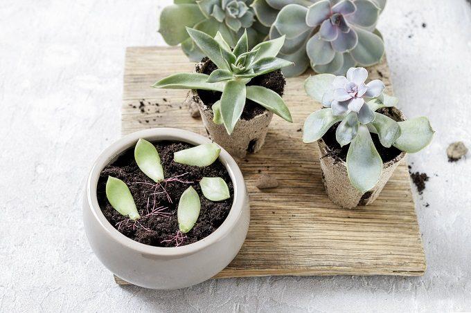 初心者でも簡単、多肉植物の基本の育て方15