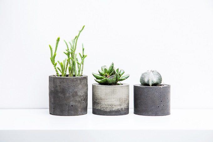 初心者でも簡単、多肉植物の基本の育て方3