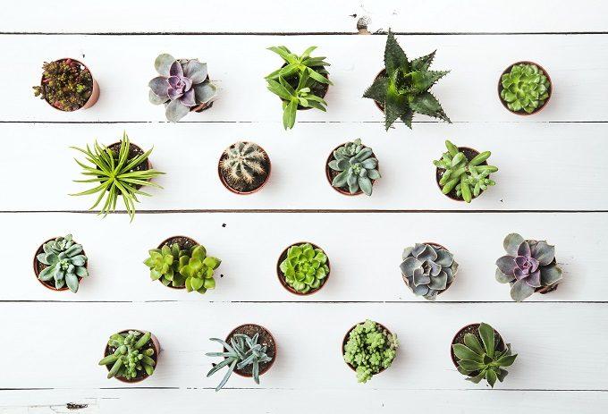 初心者でも簡単、多肉植物の基本の育て方4