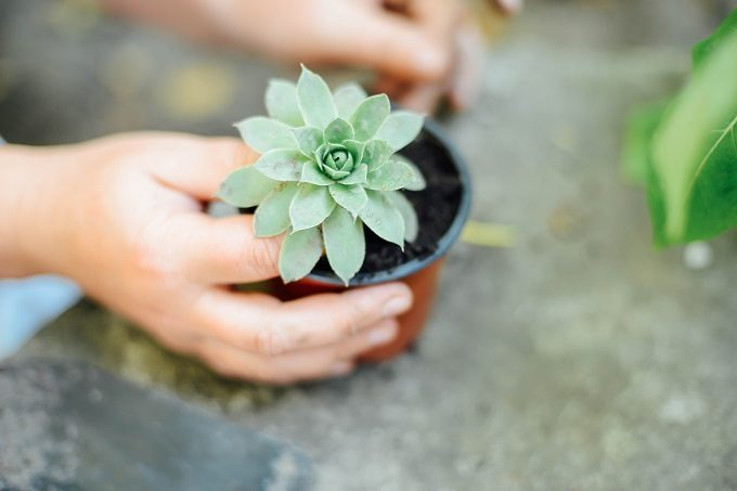 初心者でも簡単、多肉植物の基本の育て方8