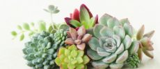 【保存版】多肉植物の育て方。水やり&基本の寄せ植え方法