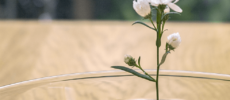 「oodesign(オーデザイン)」の「Floating Vase/RIPPLE」に花を活けた様子1