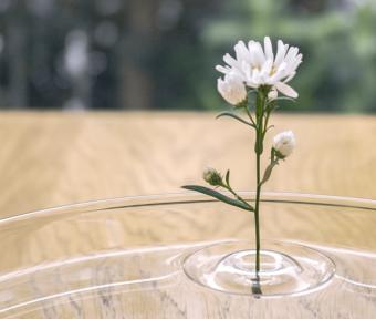 まるで水面にお花が浮いているかのよう。幻想的にお部屋を彩る「oodesign」の一輪挿し