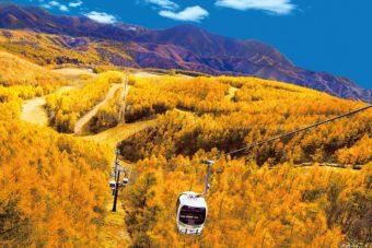 黄金色の絶景を空から眺める!裏磐梯紅葉ロープウェイご優待券