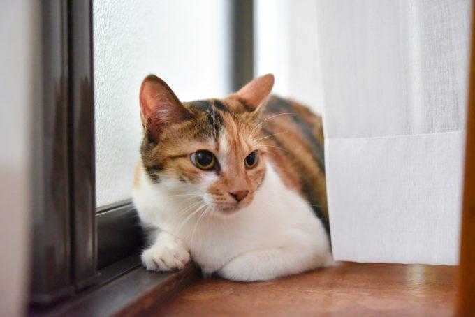 陶芸家・清水直子さんの愛猫2