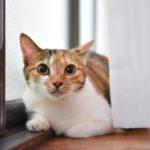 猫が教えてくれること「尊重しつつ共存する」/陶芸家・...
