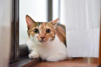猫が教えてくれること「尊重しつつ共存する」/陶芸家・清水直子さんの場合vol.2