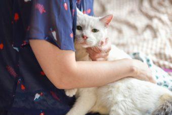猫が教えてくれること「家族」/人形洋服作家・ナナノフさんの場合vol.2