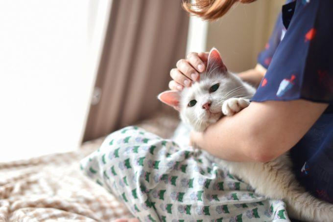 人形洋服作家・ナナノフさんの愛猫3