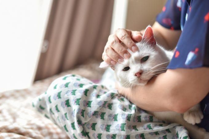 人形洋服作家・ナナノフさんの愛猫2