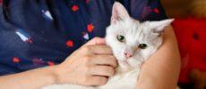 人形洋服作家・ナナノフさんの愛猫1