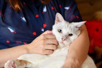 猫が教えてくれること「ただただ可愛い」/人形洋服作家・ナナノフさんの場合vol.3